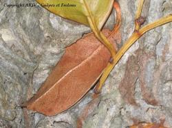 enveloppe feuilles 2